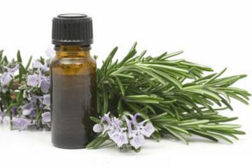 Esencia de romero, aceite esencial de romero, curso de aromaterapia en Terapias García y Lledó.