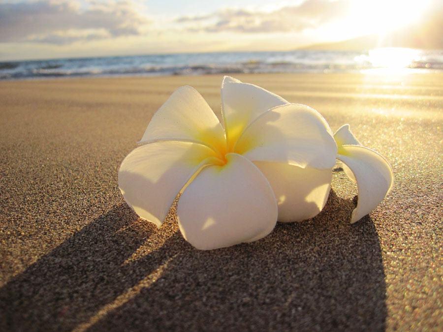 Una flor en la playa, contacta con nosotros.